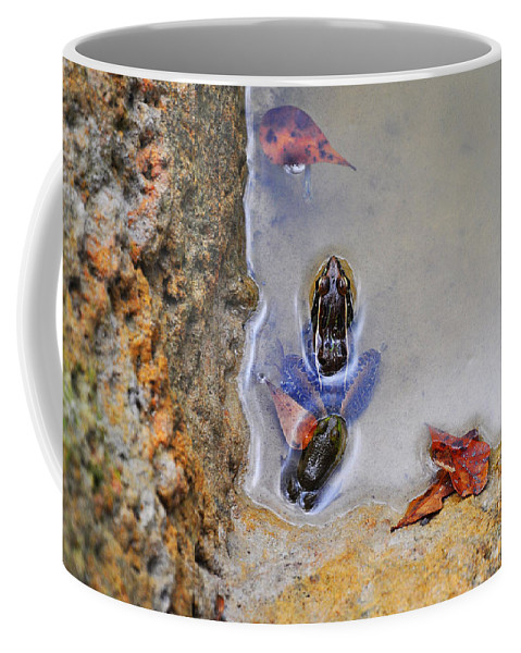 Frog Coffee Mug featuring the photograph Adopted Amphibian by Al Powell Photography USA