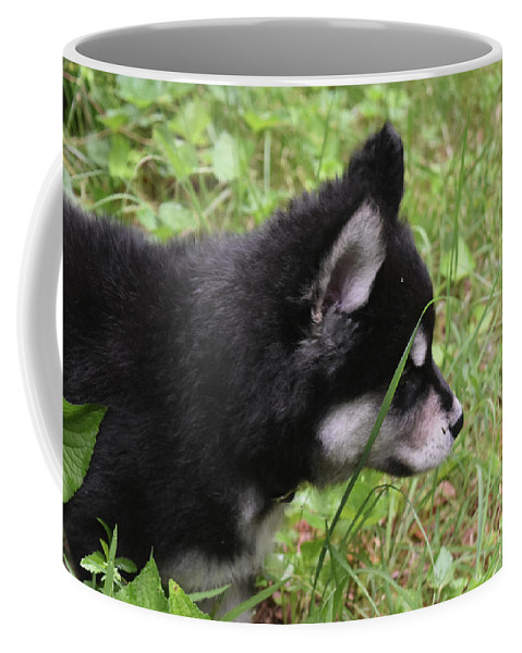 Alusky Coffee Mug featuring the photograph Adorable Alusky Pup Creeping Through Tall Blades Of Grass by DejaVu Designs