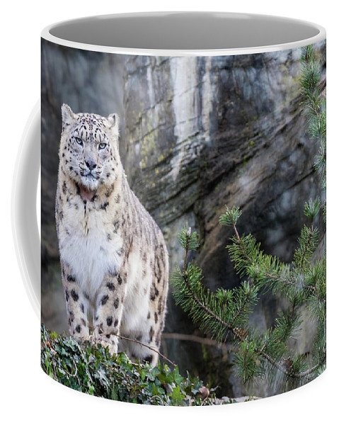 Snow Coffee Mug featuring the photograph Adult Snow Leopard Standing On Rocky Ledge by Jane Rix