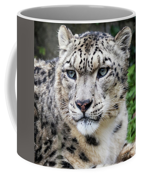 Leopard Coffee Mug featuring the photograph Adult Snow Leopard Portrait by Jane Rix