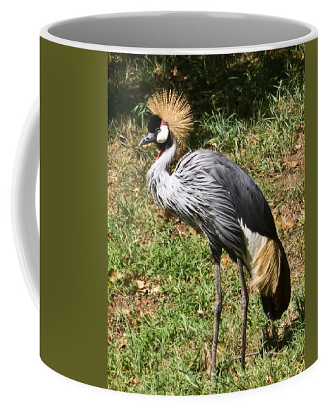 African Coffee Mug featuring the photograph African Crowned Crane Poising by Douglas Barnett