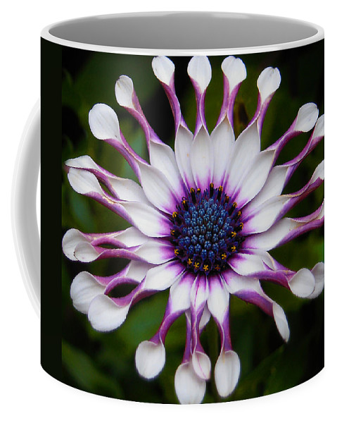 African Coffee Mug featuring the photograph African Daisy by Svetlana Sewell