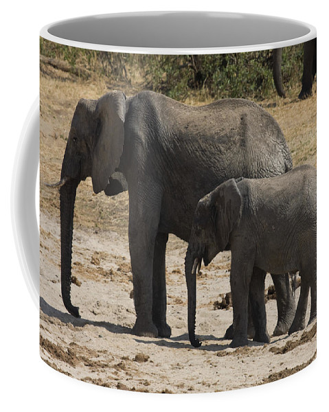 African Elephant Coffee Mug featuring the photograph African Elephants Mother And Baby by Sally Weigand