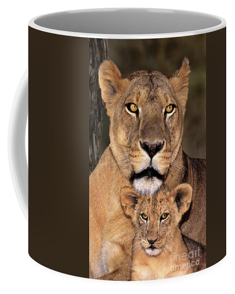 African Lion Coffee Mug featuring the photograph African Lions Parenthood Wildlife Rescue by Dave Welling