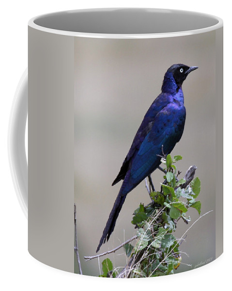 Starling Coffee Mug featuring the photograph African White Eye Starling by Joseph G Holland