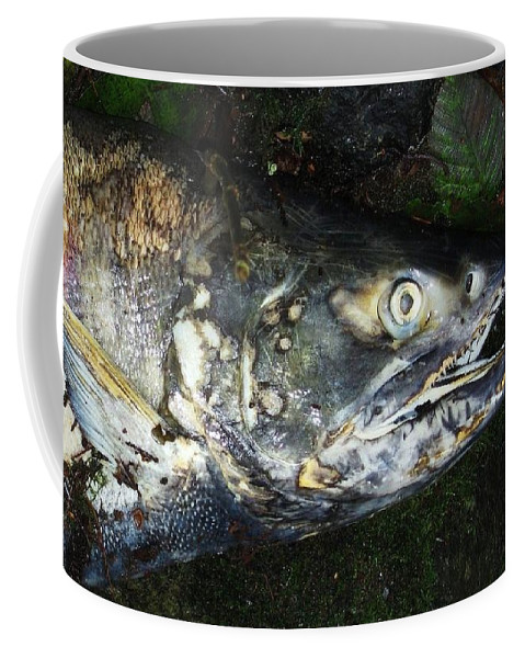 Photography Salmon Death Fish River Malahat Hatch Coffee Mug featuring the photograph After Death by Seon-Jeong Kim