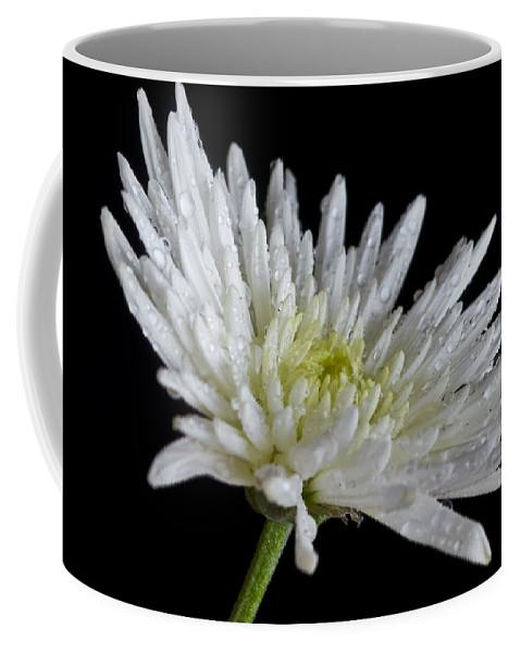 Autumn Coffee Mug featuring the photograph After Rain by Svetlana Sewell