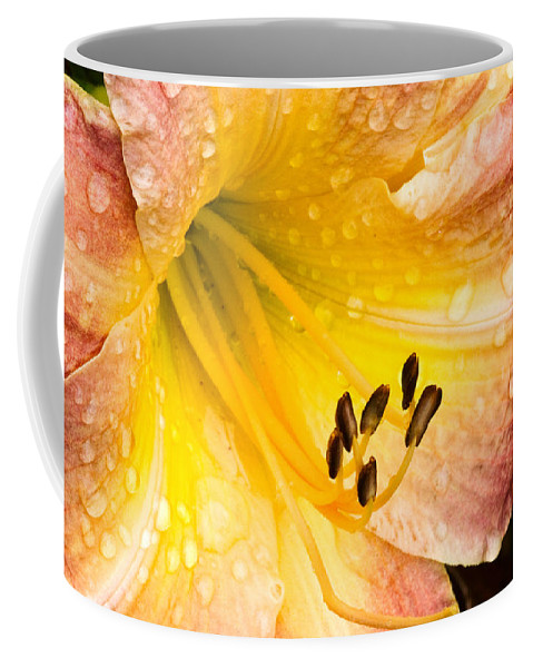 Daylily Coffee Mug featuring the photograph After The Rain by Ches Black