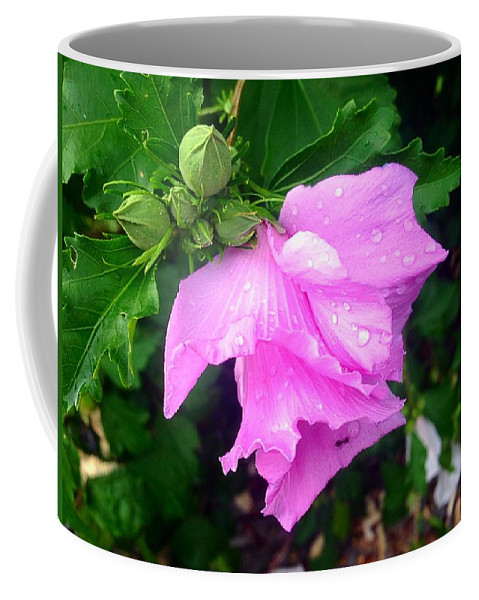 Raindrops Coffee Mug featuring the photograph After The Rain by Debra Lynch
