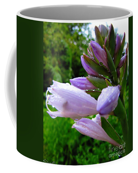Hosta Coffee Mug featuring the photograph After The Rain by September Stone