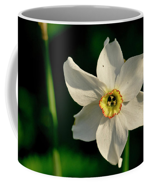 Forest Coffee Mug featuring the photograph Afternoon Of Narcissus Poeticus. by Elena Perelman