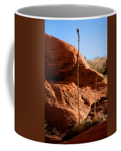 Agave Coffee Mug featuring the photograph Agave Pals by Chris Brannen