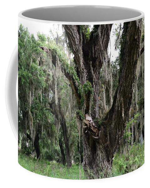 Oak Coffee Mug featuring the photograph Aging Oak Tree by Carol Bradley
