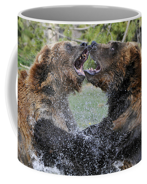 Yellowstone Coffee Mug featuring the photograph Agree To Disagree by Sandra Bronstein