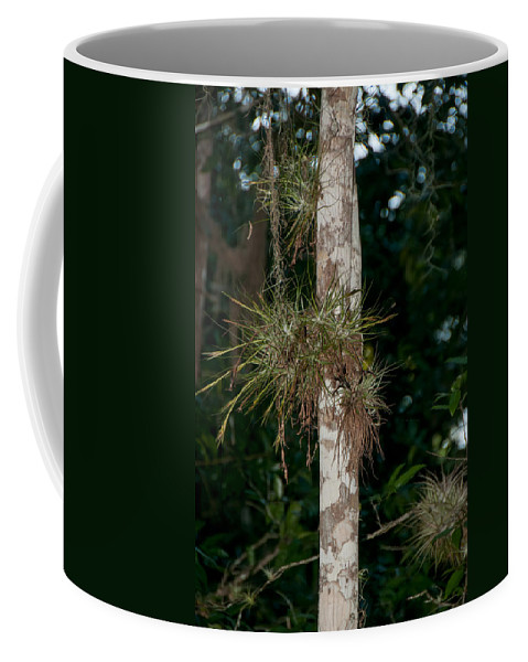 Mexico Quintana Roo Coffee Mug featuring the digital art Air Plants In Grupo Coba At The Coba Ruins by Carol Ailles