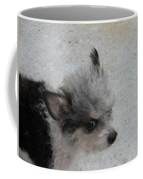 Puppy Coffee Mug featuring the photograph Airport Pup by Kelly Mezzapelle