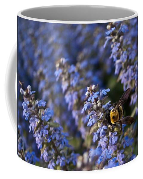 Bumblebee Coffee Mug featuring the photograph Ajuga And Bumblebee by Douglas Barnett