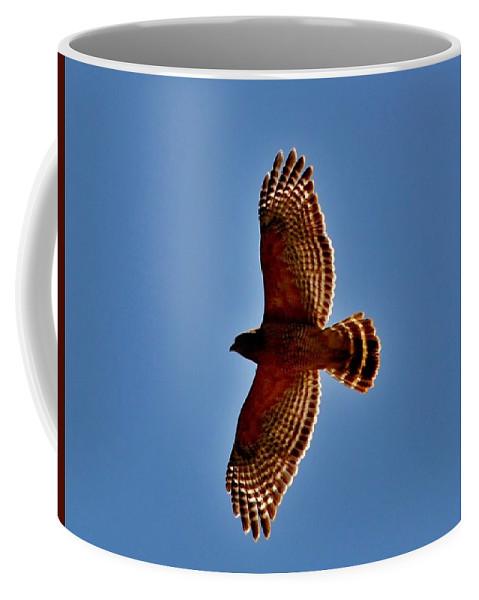 Eagle Coffee Mug featuring the photograph Osprey by Eileen Brymer