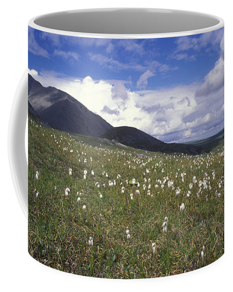 Alaska Cotton Coffee Mug featuring the photograph Alaska Cotton Eriophorum Scheuchzeri by Rich Reid