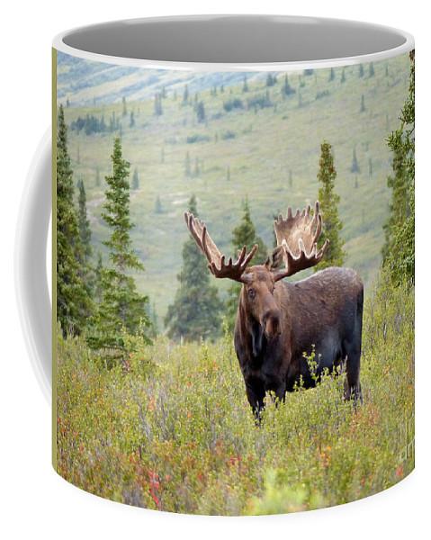 Alaskan Monarch Coffee Mug featuring the photograph Alaska Monarch #3 by Teresa A and Preston S Cole Photography
