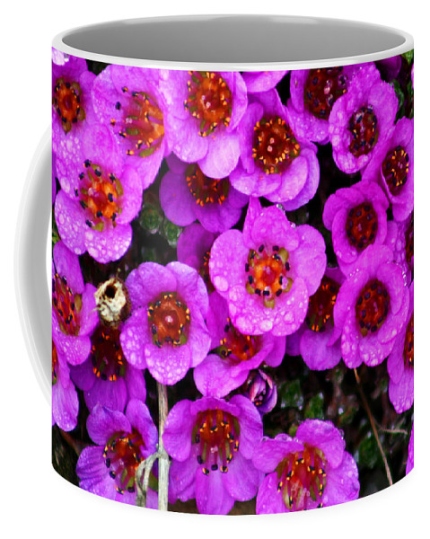Flowers. Wild Flowers Coffee Mug featuring the photograph Alaskan Wild Flowers by Anthony Jones