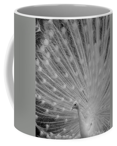 Albino Coffee Mug featuring the photograph Albino Peacock In Black And White by Joseph G Holland