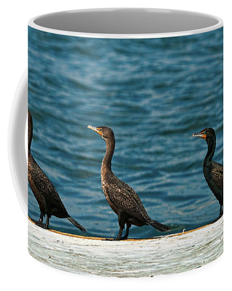 Cormorant Coffee Mug featuring the photograph All In A Row by Christopher Holmes