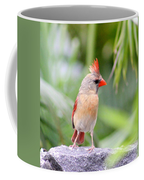All Mohawk Coffee Mug featuring the photograph All Mohawk by Kimberly Reeves