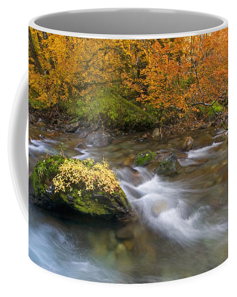 Stream Coffee Mug featuring the photograph All That Is Gold by Mike Dawson