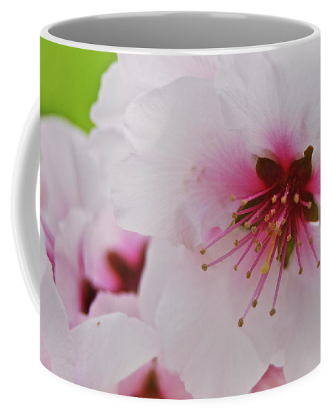 Almond Coffee Mug featuring the photograph Almond Blossom by Michael Peychich