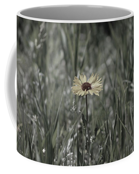 Yellow Daisy Coffee Mug featuring the photograph Almost Black and White Yellow Daisy in Field Photograph by Colleen Cornelius