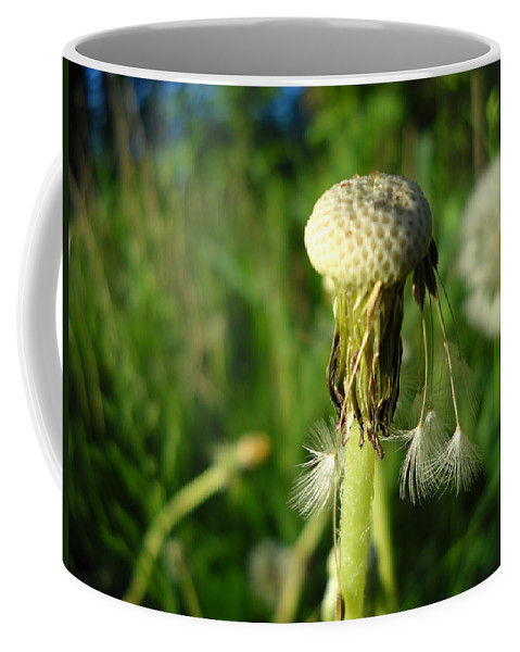 Dandelion Coffee Mug featuring the photograph Almost Gone Dandelion Seeds by Kent Lorentzen