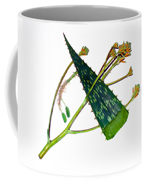 Aloe; Vera; Medicine; Properties; Medicinal; Ailments; Biblical; Ointment; Burns; Burn; Cuts; Rash; Coffee Mug featuring the photograph Aloe Vera by Allan Hughes