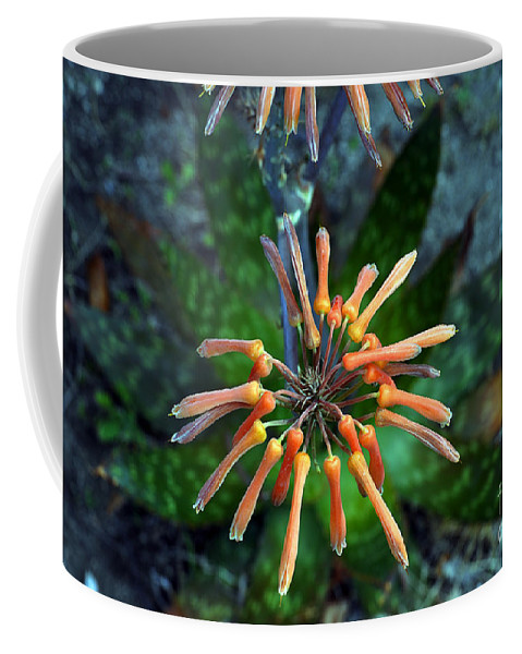 Clay Coffee Mug featuring the photograph Aloe Vera by Clayton Bruster