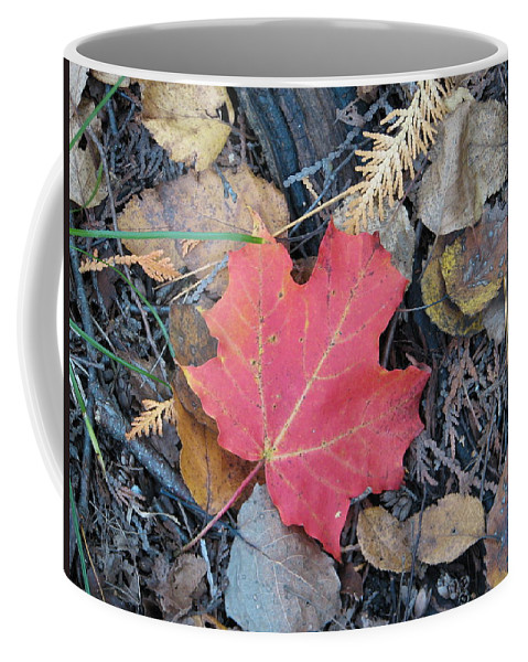Leaves Coffee Mug featuring the photograph Alone In The Woods by Kelly Mezzapelle