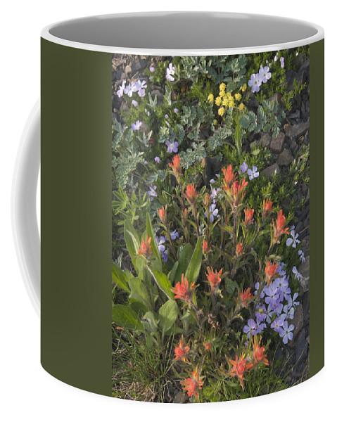 Alpine Coffee Mug featuring the photograph Alpine Wildflowers Hurricane Ridge 4031 by Bob Neiman