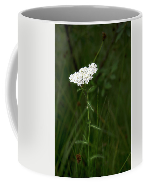 White Coffee Mug featuring the photograph Alpine Yarrow Wildflower 2 by Alisha Jurgens