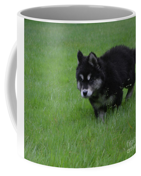 Alusky Coffee Mug featuring the photograph Alusky Puppy Creeping Through Green Grass by DejaVu Designs