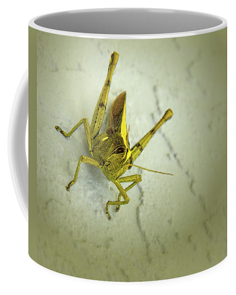 Alutacea Coffee Mug featuring the photograph Alutacea Bird Grasshopper by Mitch Spence