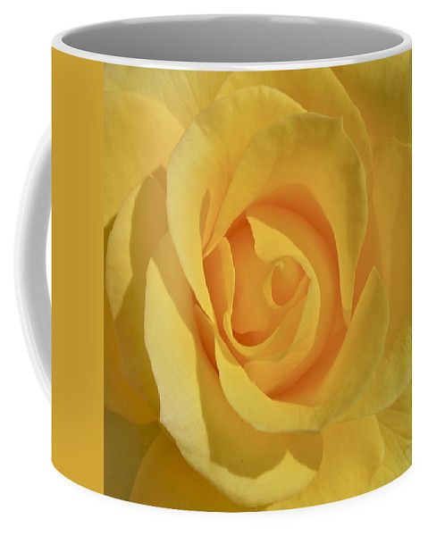 Photograph Or Yellow Rose Coffee Mug featuring the photograph Amarillo by Gwyn Newcombe