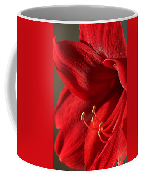 Flower Coffee Mug featuring the photograph Amaryllis6689 by Gary Gingrich Galleries