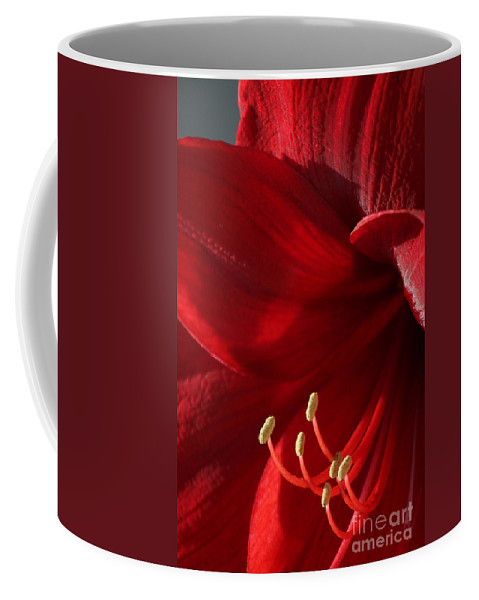Flower Coffee Mug featuring the photograph Amaryllis6790 by Gary Gingrich Galleries