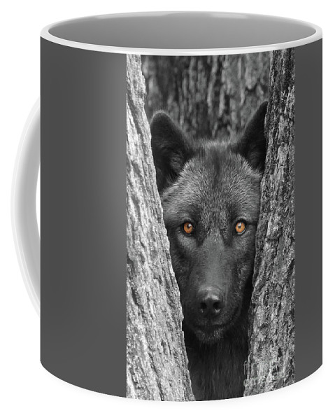 Wolf Coffee Mug featuring the photograph Amber by Shari Jardina