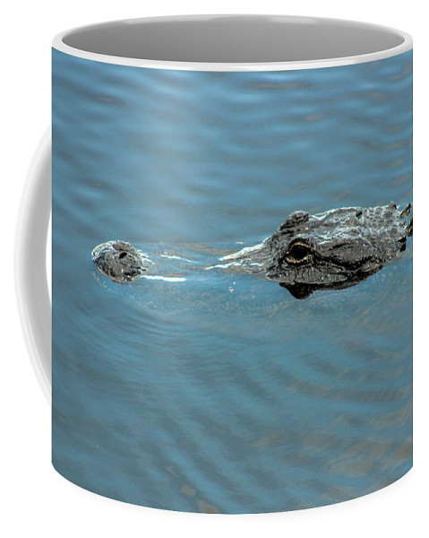 Photo For Sale Coffee Mug featuring the photograph American Alligator Profile by Robert Wilder Jr