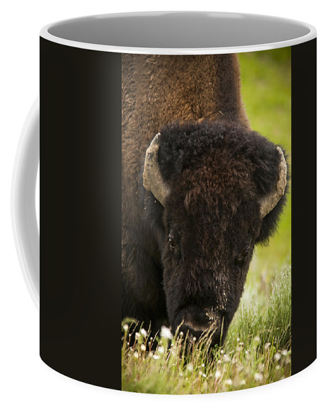 Bison Coffee Mug featuring the photograph American Bison by Chad Davis