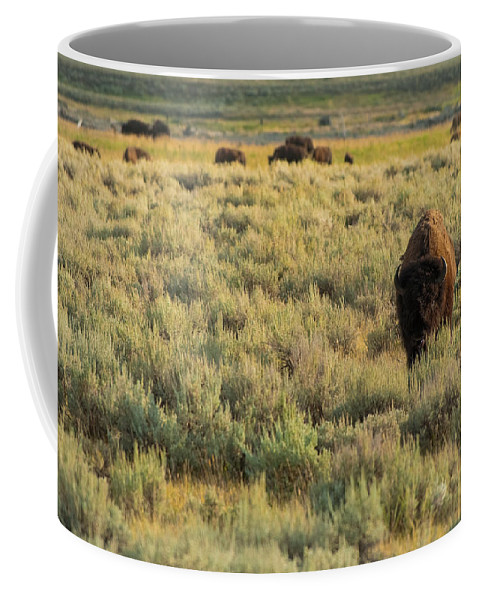 American Bison Coffee Mug featuring the photograph American Bison by Sebastian Musial