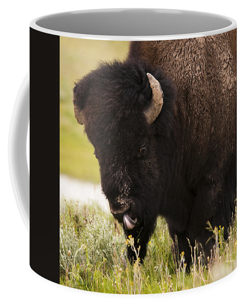 Bison Coffee Mug featuring the photograph American Bison Tongue by Chad Davis