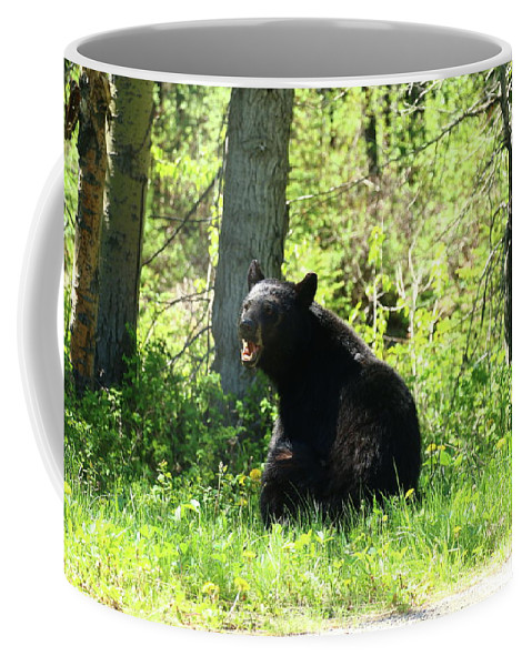 Ursus Americanus Coffee Mug featuring the photograph American Black Bear by Christiane Schulze Art And Photography