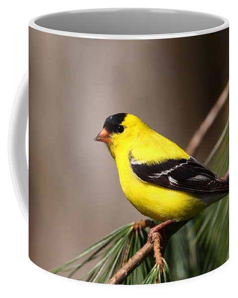 Goldfinch Coffee Mug featuring the photograph American Goldfinch by Bruce J Robinson
