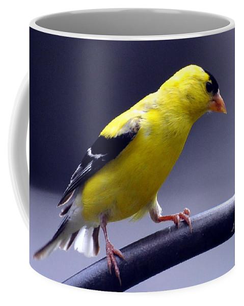 Bird Coffee Mug featuring the photograph American Goldfinch by Glenn Gordon